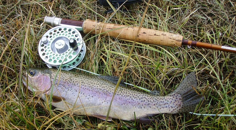rainbow-trout-609551_960_720